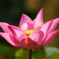 誘導瞑想 心を静める