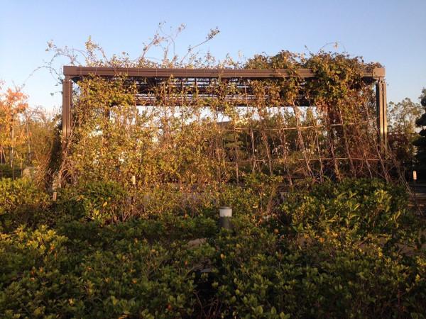 緑のカーテン 目黒天空庭園