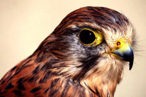 鷹 自分を変える