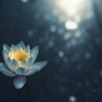瞑想とぼーっとする事の違い